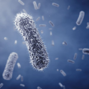 Bacteriele belasting